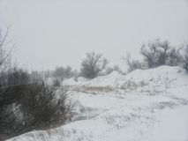 Russland, UralJanuary, Temperatur -33C Bäume im Schutz eines Winterblizzards Hintergrund auf einem Winterthema Stockfotografie