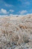 Russland, UralJanuary, Temperatur -33C Eis-bedeckte Niederlassungen von Büschen und von Gras nach anormalem Eisregen Stockfoto