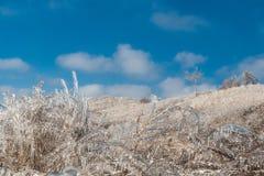 Russland, UralJanuary, Temperatur -33C Eis-bedeckte Niederlassungen von Büschen und von Gras nach anormalem Eisregen Lizenzfreie Stockfotografie