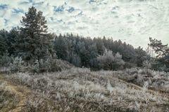 Russland, UralJanuary, Temperatur -33C Eisiger Wald auf einem Hintergrund des blauen Himmels mit Wolken Stockfotos