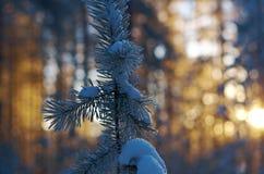 Russland, UralJanuary, Temperatur -33C Kleines Haus im Schnee deckte Holz in den Schweizer Alpen ab Stockbild