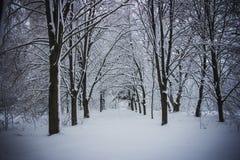 Russland, UralJanuary, Temperatur -33C Park, Bäume des Waldes im Schnee lizenzfreie stockfotografie