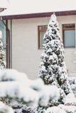 Russland, UralJanuary, Temperatur -33C Schneebedeckter Baum im Hintergrund des hohen Hauses Lizenzfreies Stockbild