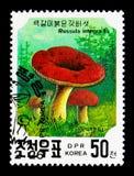 Russula Integra, serie dei funghi, circa 1991 Fotografia Stock Libera da Diritti