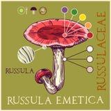 Russula vector illustration
