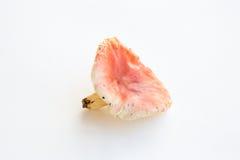 Russula mushroom Stock Photo