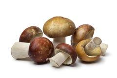 Russula mushrooms Stock Photography