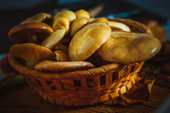 Russula mushrooms in a wicker basket close up on moss Royalty Free Stock Photography