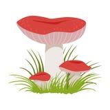 Russula xerampelina, edible forest mushrooms. Colorful cartoon illustration Royalty Free Stock Image