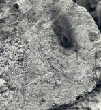 Rust on damaged concrete pillar. Stock Image