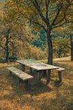 Rust in een groen bos Stock Afbeeldingen