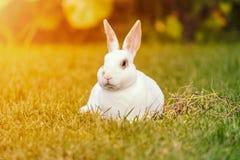 Rust en snoepje weinig witte konijnzitting op groen gras royalty-vrije stock afbeelding