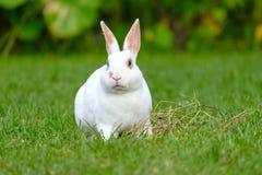 Rust en snoepje weinig witte konijnzitting op groen gras stock fotografie