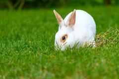 Rust en snoepje weinig witte konijnzitting op groen gras royalty-vrije stock afbeeldingen