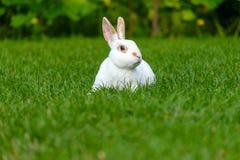 Rust en snoepje weinig witte konijnzitting op groen gras stock afbeeldingen