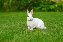 Rust en snoepje weinig witte konijnzitting op groen gras stock afbeelding