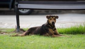 Rust hond royalty-vrije stock foto