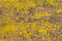 Rust and lichen Royalty Free Stock Photo