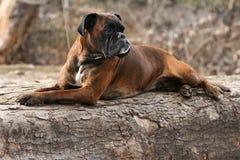 Rust op een boomboomstam Royalty-vrije Stock Foto's
