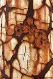 rust texture 7 closeup Stock Photo