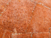 Rust textured Stock Images