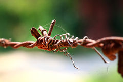 Rusted barb wire Stock Photos