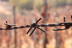 Rusted Barbed Wire Royalty Free Stock Image