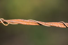 Rusted Barbed Wire Fence stock photography