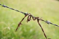 Rusted barbed wire. Stock Photos