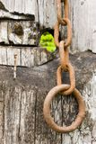 Rusted chain Royalty Free Stock Photos