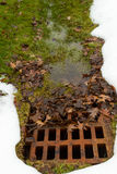 Rusted drainage grate clogged with leaves Royalty Free Stock Photography