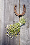 Rusted horseshoe and chamomile bunch on wall Royalty Free Stock Image