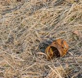Rusted kann mit Löchern in ihm legend auf einem Gebiet Lizenzfreie Stockfotos