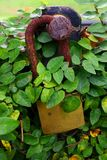 Rusted Lock. A old Rusted Lock among leaves Royalty Free Stock Photography
