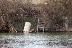 Rusted metal barrel next to improvised wooden ladders put on local river bank surrounded with dense dried vegetation and branches. On warm sunny spring day stock image