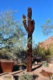 Desert Botanical Garden Phoenix Arizona. Rusted metal cactus at the Desert Botanical Garden during the winter located in Phoenix Arizona Royalty Free Stock Images