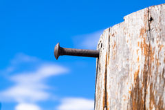 Rusted Nail Stick out of The Old Log Stock Image