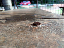 A rusted nail on wooden table. A nail is seen clearly at wooden surface while there is a car in background Royalty Free Stock Photos