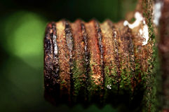 The rusted old iron nut which can't be turned off Royalty Free Stock Photography