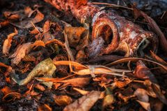 Rusted old pipe over dry leaves on sunset royalty free stock images