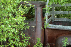 Rusted Old Truck. This is a photo of an old rusted truck in the woods with trees growing all around it Royalty Free Stock Image