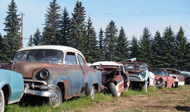 Rusted Out Antique Cars Royalty Free Stock Photo