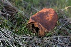 Rusted puede Fotografía de archivo