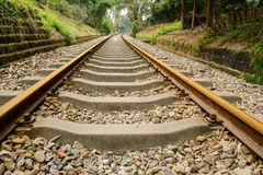 Rusted railway in verdant green Stock Photography