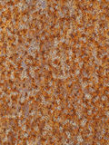 Rusted steel pattern Royalty Free Stock Photo