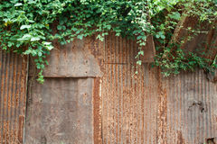 Rusted texture and green leaves Royalty Free Stock Image