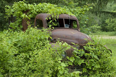 Rusted truck buried in foliage_2 Royalty Free Stock Photography