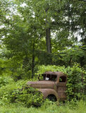 Rusted truck buried in foliage_3 Stock Images