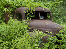 Rusted truck buried in foliage_4 Stock Image