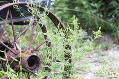Rusted wheel hub spokes rim Royalty Free Stock Images